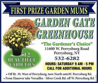 First Prize Garden Mums