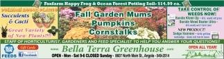 Fall Garden Mums